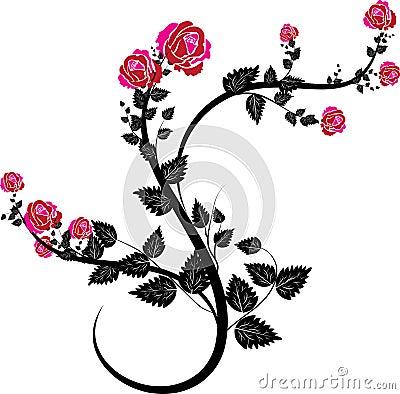 Rose vines-9
