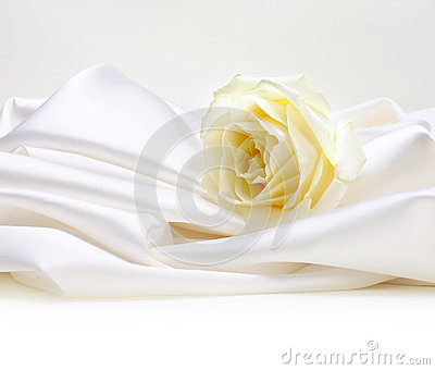 Rose on white silk