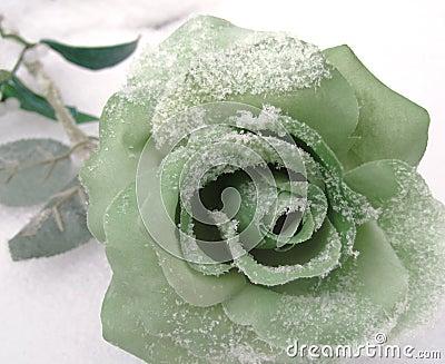 Green Silk Rose in Winter Snow