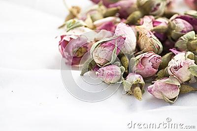 Roseblumen auf weißem Hintergrund
