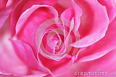Rosebud in motion