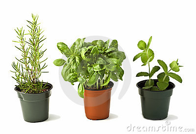 Rosemary, Basil and Mint