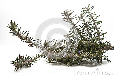 Rosemary branch and flowers