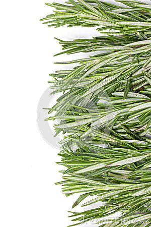 Rosemary Herbal Frame.