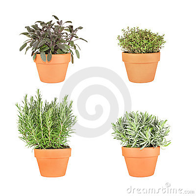 Rosemary, Lavender, Sage and Thyme