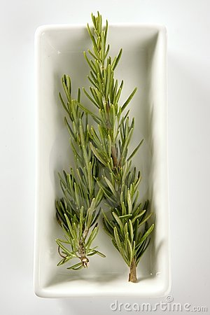 Rosemery aromatic plant in a white dish