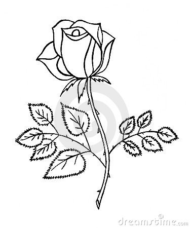 Rosen skizze stockfotografie bild 13390992 for How to draw a rose bush step by step