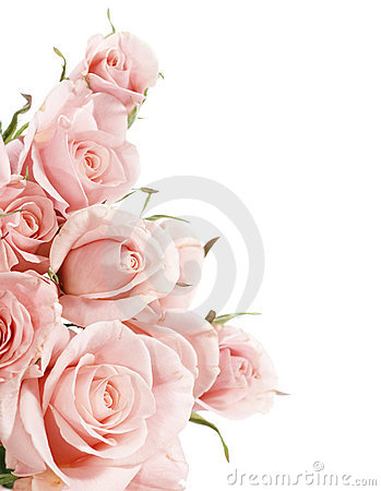 Free Roses Royalty Free Stock Photography - 11983907