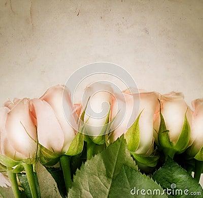 Free Roses Stock Photo - 12414830