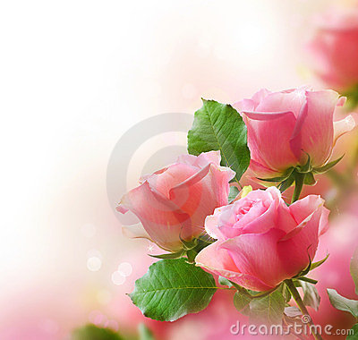 Free Roses Stock Photography - 23385792