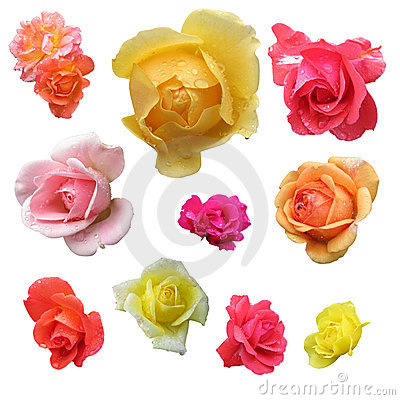 Free Roses Stock Photography - 8314872
