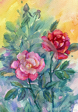 Roses on a abstract background. Watercolor.