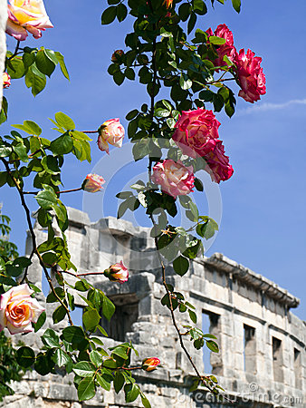 Roses and amphitheater