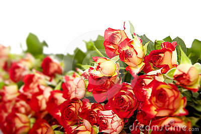 Roses in a bunch isolated on a white background