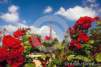 Roses at Champ de Mars