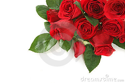 Roses With Copy Space for Your Text or Image