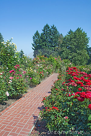 Roses, evergreens and red brick path vertical