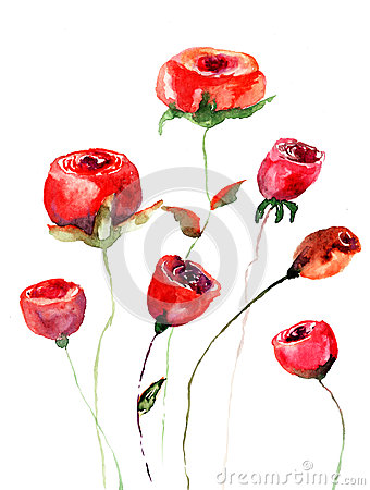 Roses flowers, watercolor illustration