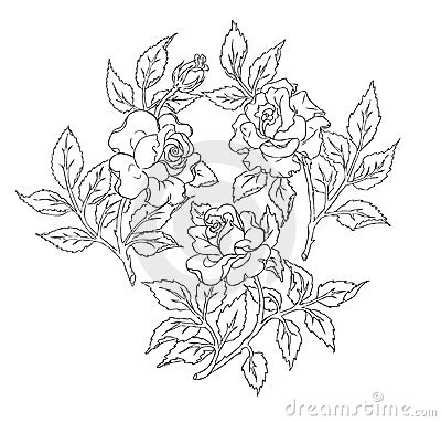 Roses. A freehand drawing.