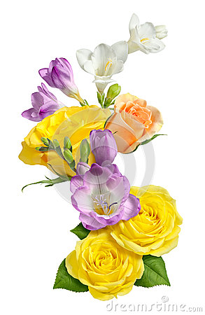 Roses & Freesia isolated
