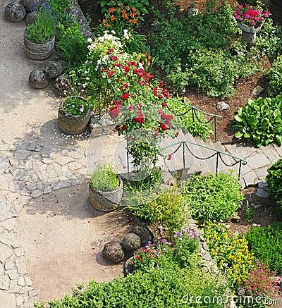 Roses in landscaped garden