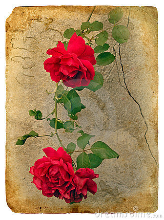 Roses. Old postcard