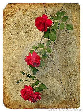 Roses. Old postcard
