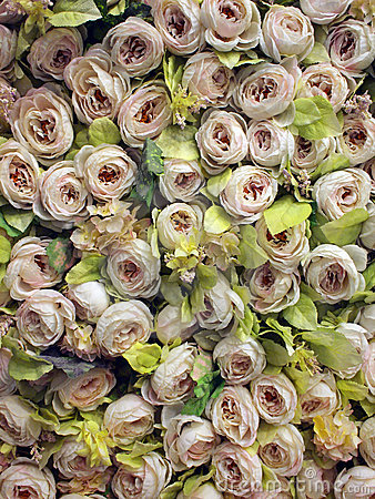 Free Roses On Wall Royalty Free Stock Photos - 12936998