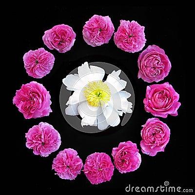 Roses & Peony
