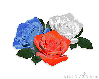 Roses red white and blue isolated