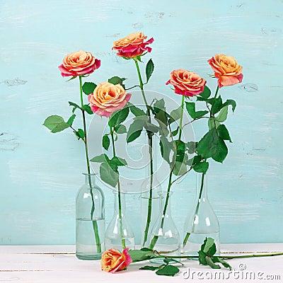 roses roses dans des bouteilles en verre photo stock image 69088998. Black Bedroom Furniture Sets. Home Design Ideas