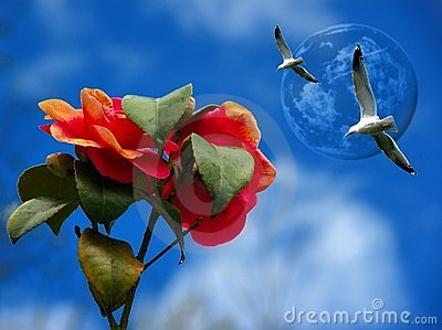 Roses and seagulls against a blue sky.