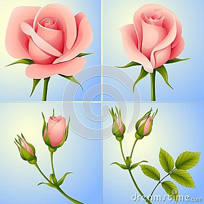 Roses set blue