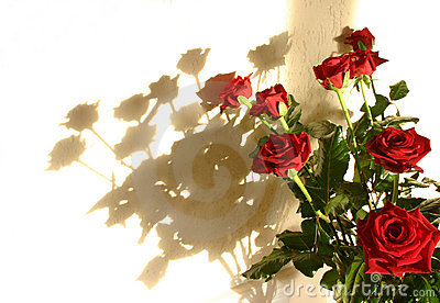 Roses shadow