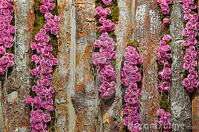 Roses on timber