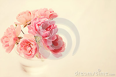 Roses In Vase on Pink