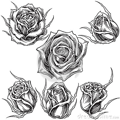 Free Roses Vector Set 01 Royalty Free Stock Photography - 36052727