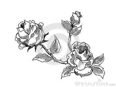 Roses vintage style drawing