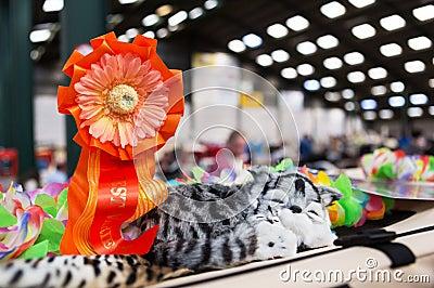 Rosette at a cat show