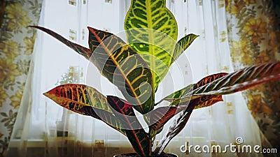 Rosnące rośliny w poklatce, kwiat rosnący w plamkach podnoszą liście, kiełkowanie w domu, wiosenne wschód słońca zbiory wideo