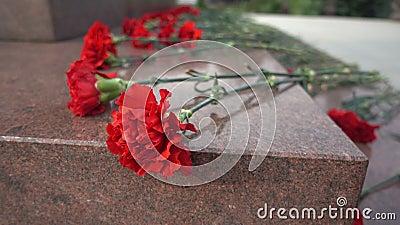 Rote Blumen auf einer Finanzanzeige stock video footage