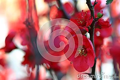 Rote Blumen-Blüte