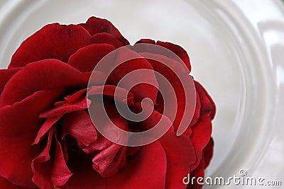 Rote Rose auf Porzellan