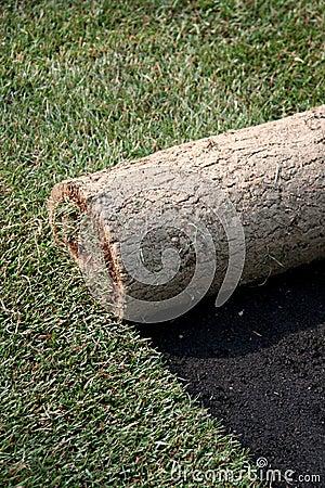 Rotoli di tappeto erboso prato inglese fotografie stock for Prato erboso a rotoli