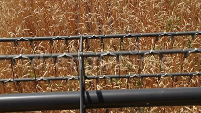 Rotor des Mähdreschers schneidet Weizenähren 3 stock footage