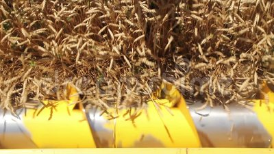 Rotor des Mähdreschers schneidet Weizenähren stock video