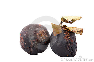 Rotten apples with dry leaves