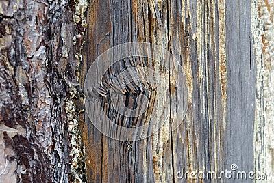Rotten damaged wood texture