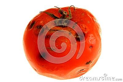 Rotten tomato 2
