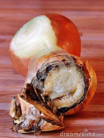 Rotteness of onion